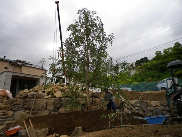 メイン庭園シダレザクラ