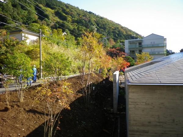 北側斜面植栽2